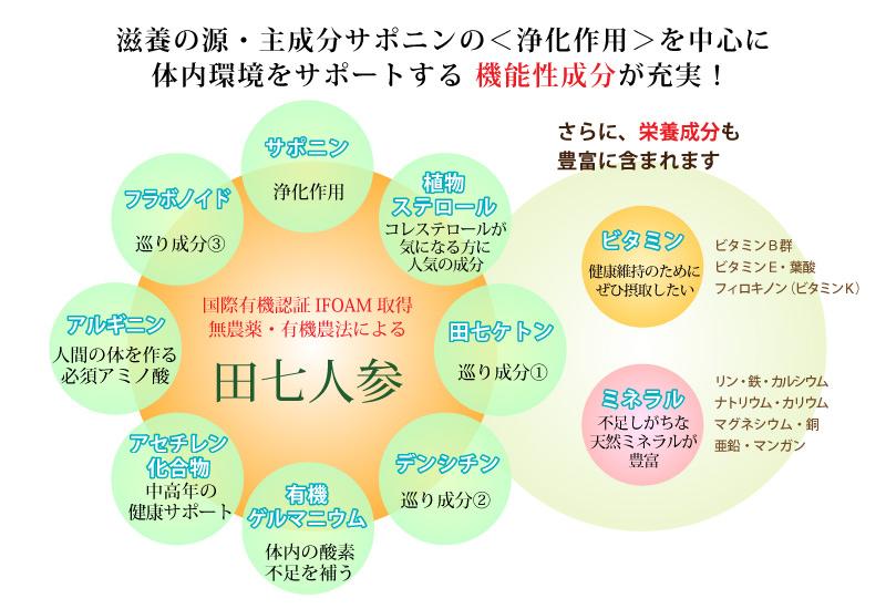 田七人参に含まれる栄養素