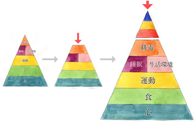 美肌ピラミッド